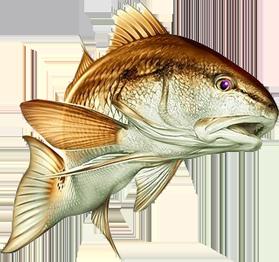 bait and tackle pine island fishing tackle